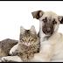 Alto Taquari| Secretaria de Saúde divulga data para o dia D da Campanha de vacinação contra Raiva de Cães e Gatos