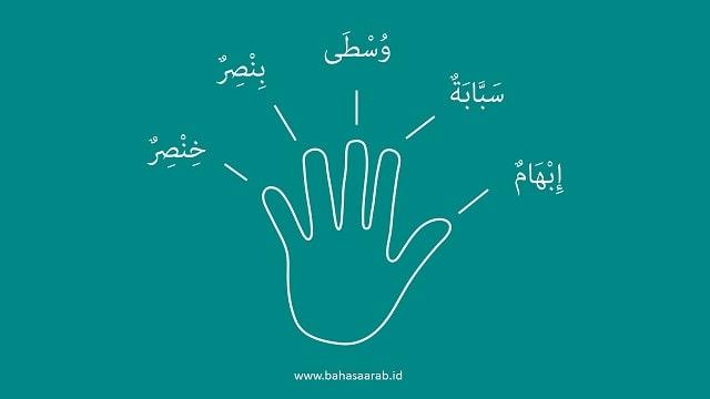 Bahasa Arab Jari-Jari di Tangan - Kosakata