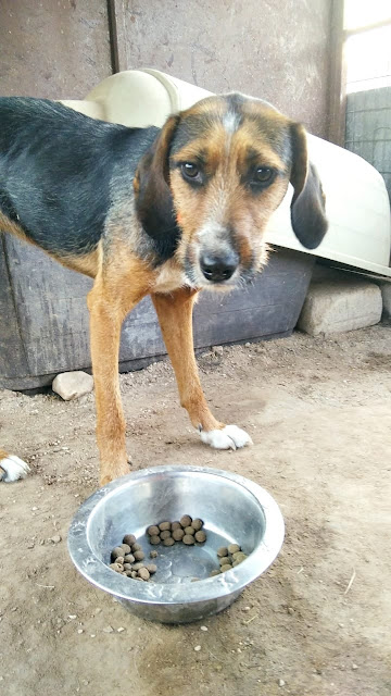 Puppy Lucy abandoned Greek stray looking for her forever home