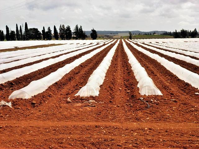 pengolahan bedengan untuk tanaman melon