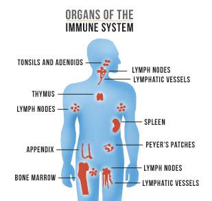 How to boost immune system - RevatFitness