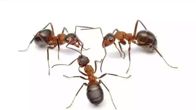 Το Κόλπο να Εξαφανίσετε τα Μυρμήγκια από το Σπίτι
