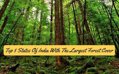 Top 5 States Of India With The Largest Forest Cover