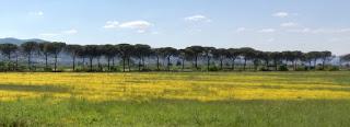 Immagine - Campo - Fiorito - Cascine - Tavola - Prato