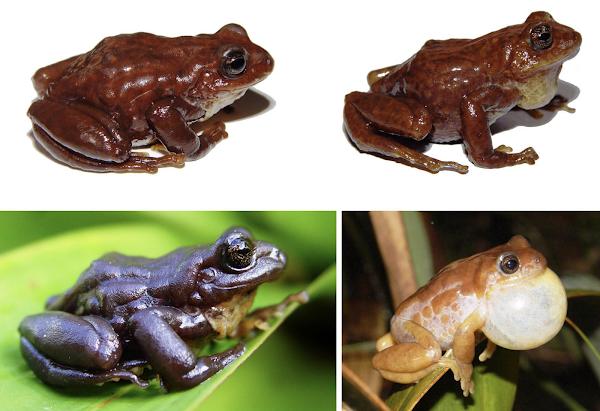 Nuevas especies demuestran la biodiversidad que albergan los páramos andinos