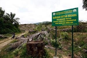 Walhi Aceh Bantah Kelapa Sawit Tidak Merusak Lingkungan