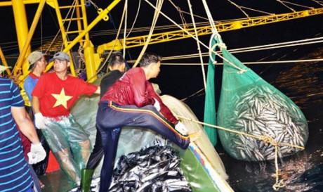 Sau bão ngư dân hối hả đánh những mẻ cá lớn