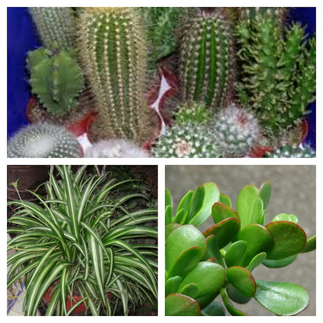 care for your winter gardens