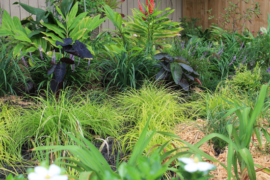 The Rainforest Garden 7 Ways To Fix An Ugly Garden With