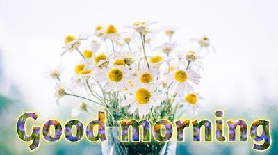 good morning flowers GIF good morning flowers download