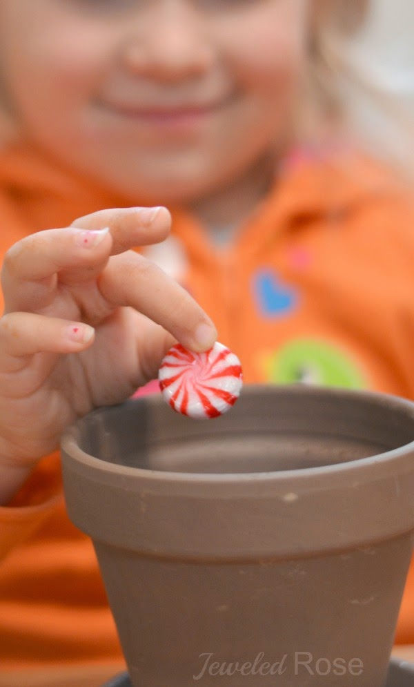 Wow kids of all ages this holiday and grow a candy cane!  This magical craft activity is perfect for the Christmas season. #growacandycaneforkids #growacandycane #howtogrowacandycane #candycanecraftsforkids #candycaneactivities #candycaneseeds #candycanescience #christmascrafts #christmascraftsforfamilies #growingajeweledrose #activitiesforkids