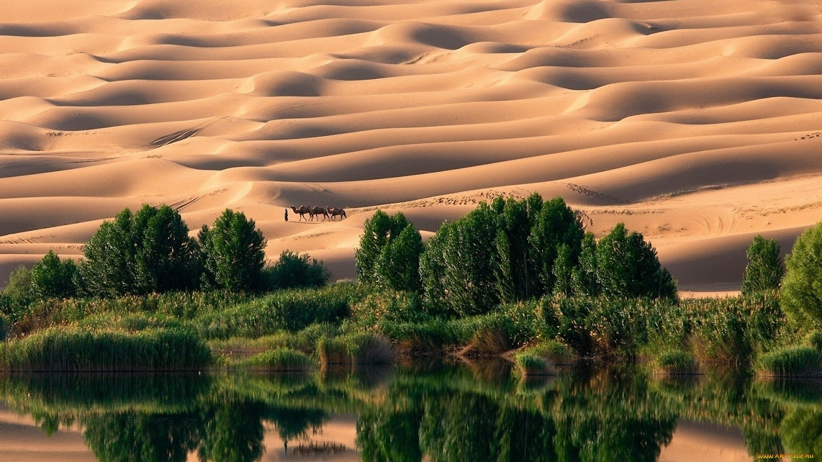TISOTIT: Desert Oasis Wallpaper