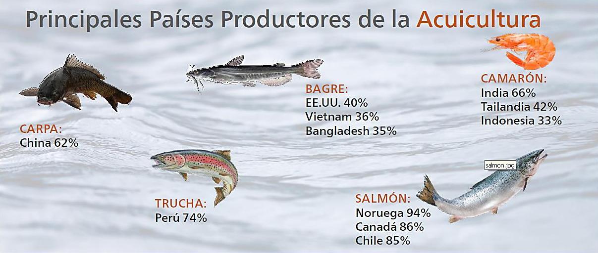 Acuicultura per producci n mundial de alimentos for Alimentos balanceados para truchas