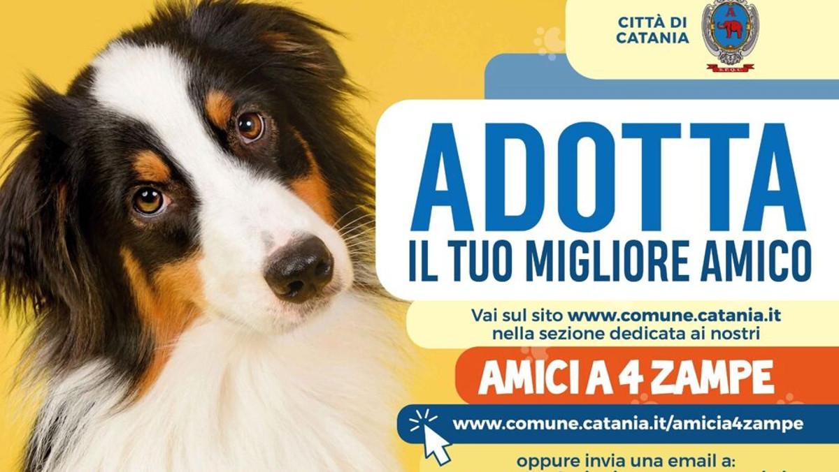 Catania Dog Card