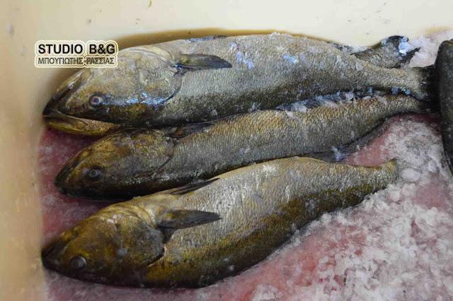 Εκλεκτής ποιότητας ψάρι μυλοκόπι διαθέτει και σήμερα το Εργατικό Κέντρο Ναυπλίου