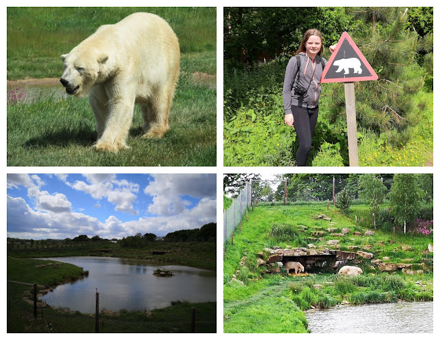 Polar bear enclosure collage