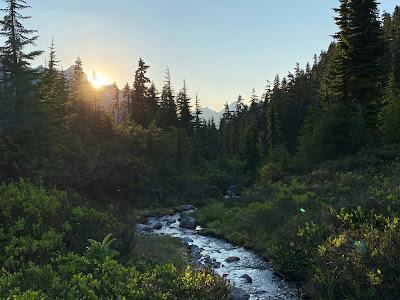 Mount Baker Forest - Aaron Bishop - Unsplash