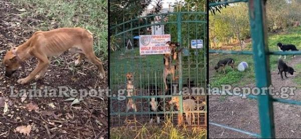 Στυλίδα: «Κολαστήριο» ζώων στην Κουβέλα - Συνέλαβαν μια γυναίκα