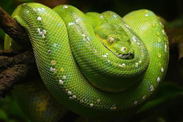7 Jenis Ular Dengan Warna Tercantik di Dunia