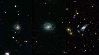 Cosmos Flower Vs Cosmos the Universe