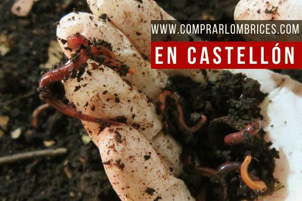 Dónde Comprar Lombrices en Castellón en www.comprarlombrices.com