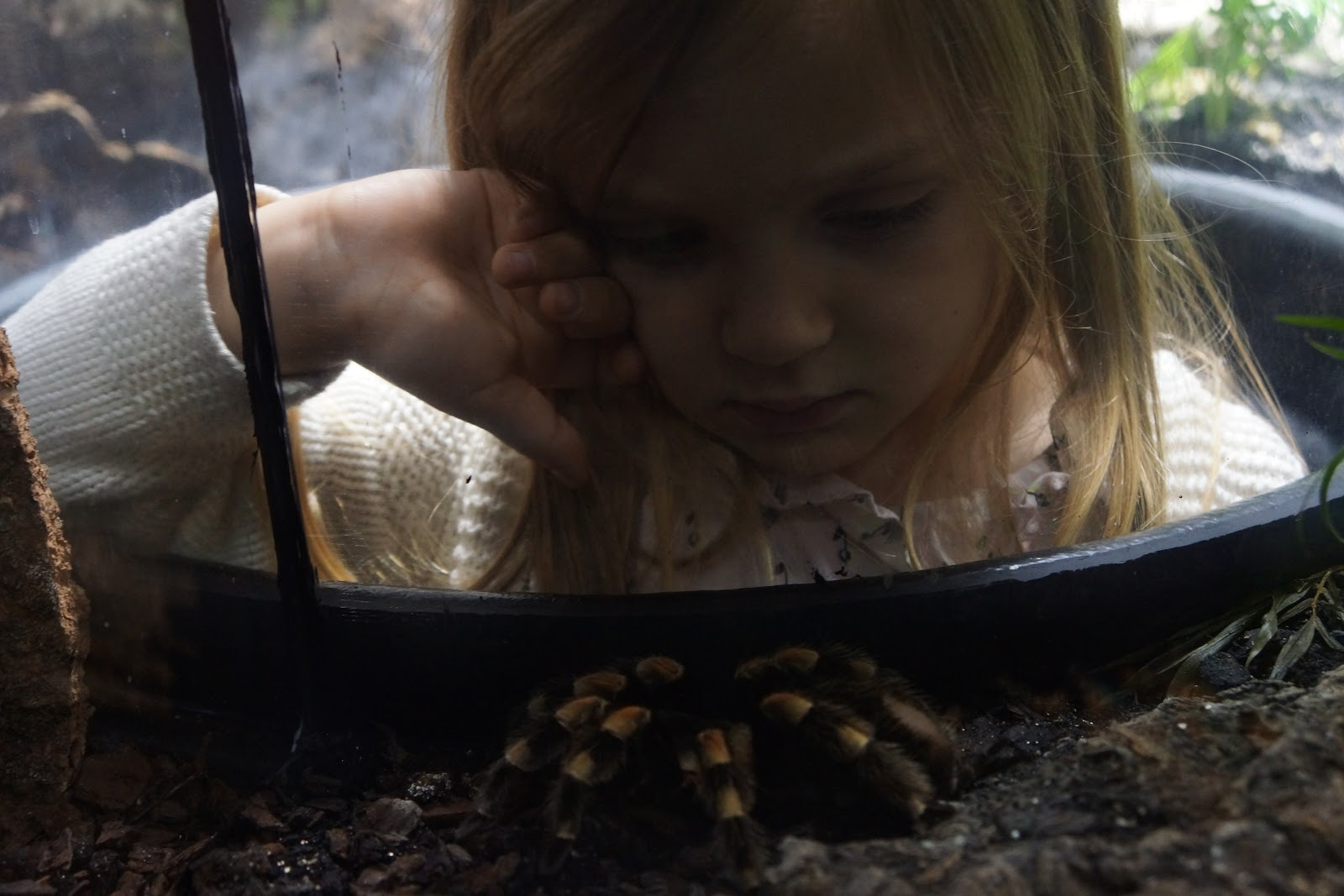 girl looking at tarantula