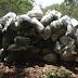 PF apreende 1,3 tonelada de maconha em fazenda na zona rural de Floresta-PE