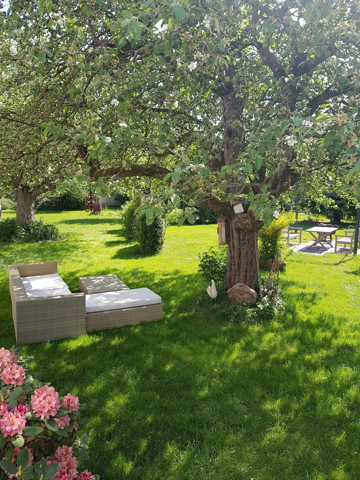 Alte Apfelbäume Obstbäume im Garten. Dekoidee Loungesofa