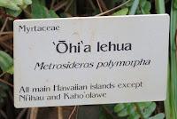 Precious 'Ohi'a lehua - Lyon Arboretum, Manoa Valley, Oahu, HI