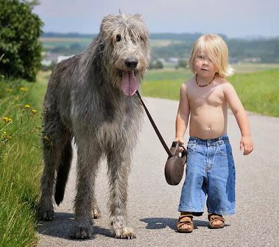 perro gigante y niño