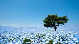 Taman Hitachi Seaside di Jepang