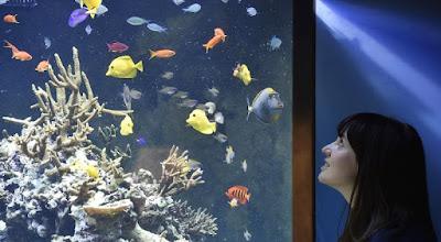 Jenis Ikan Hias Air Tawar Yang Dapat Di Gabung Di Aquarium