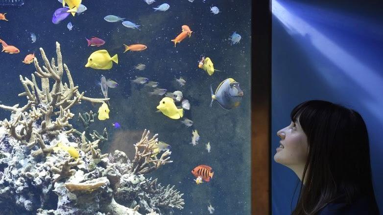Jenis Ikan Hias Air Tawar Yang Dapat Di Gabung Satu Aquarium Ikanesia Id