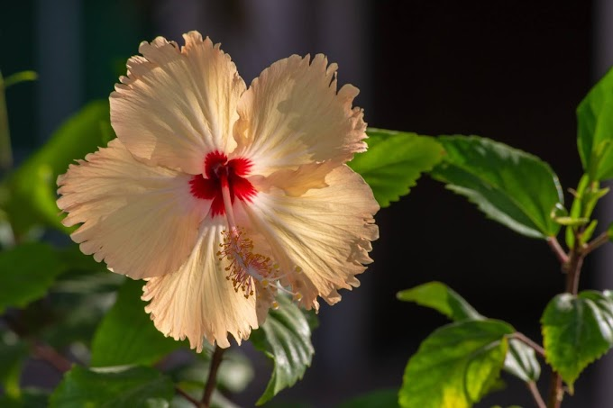 14 Impressive Health Benefits of Hibiscus Tea.