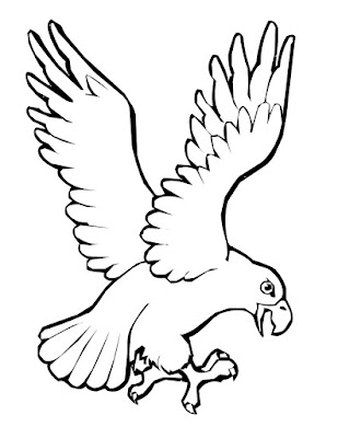 Gambar Sketsa Burung Rajawali