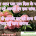 love shayari in hindi for girlfriend, love image, pal pal dil ke paas