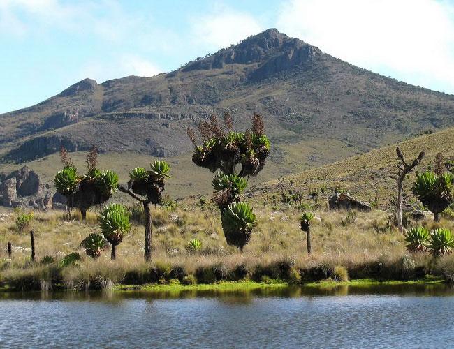Xvlor Mount Elgon National Park is volcano reserve on Uganda and Kenya
