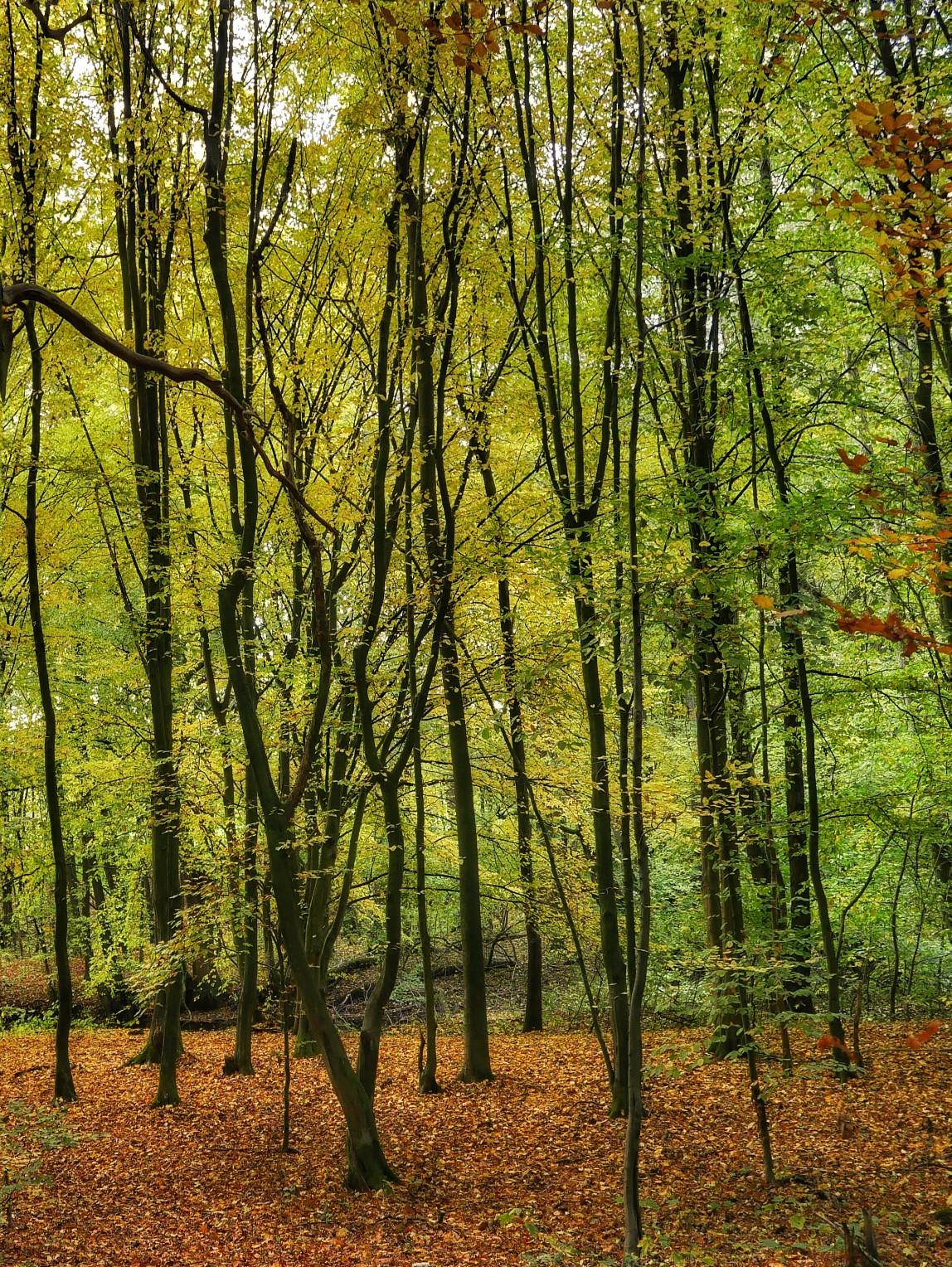 Elbgeest, sachsenwald