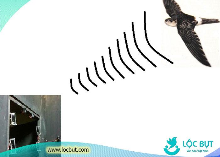 Chim yến tìm nguồn phát ra âm thanh thu hút.