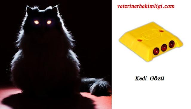kedi gözü neden parlar