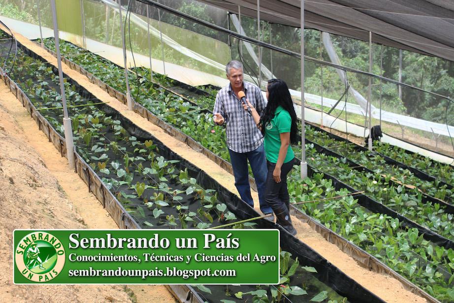Gabriel Convit productor agrícola