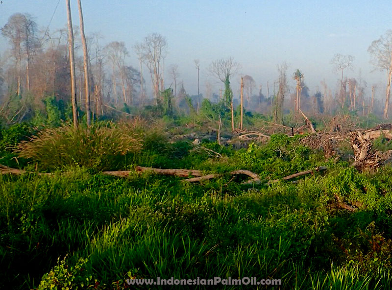 kementerian lingkungan hidup tolak perluasan perkebunan kelapa sawit