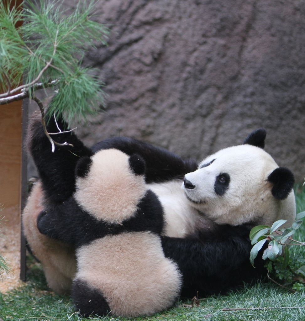 28. Yun Zi with mom Bai Yun by Karl Drilling