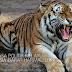 Kuasa Politik Melayu seperti Harimau Yang Luka Perlukan Rawatan