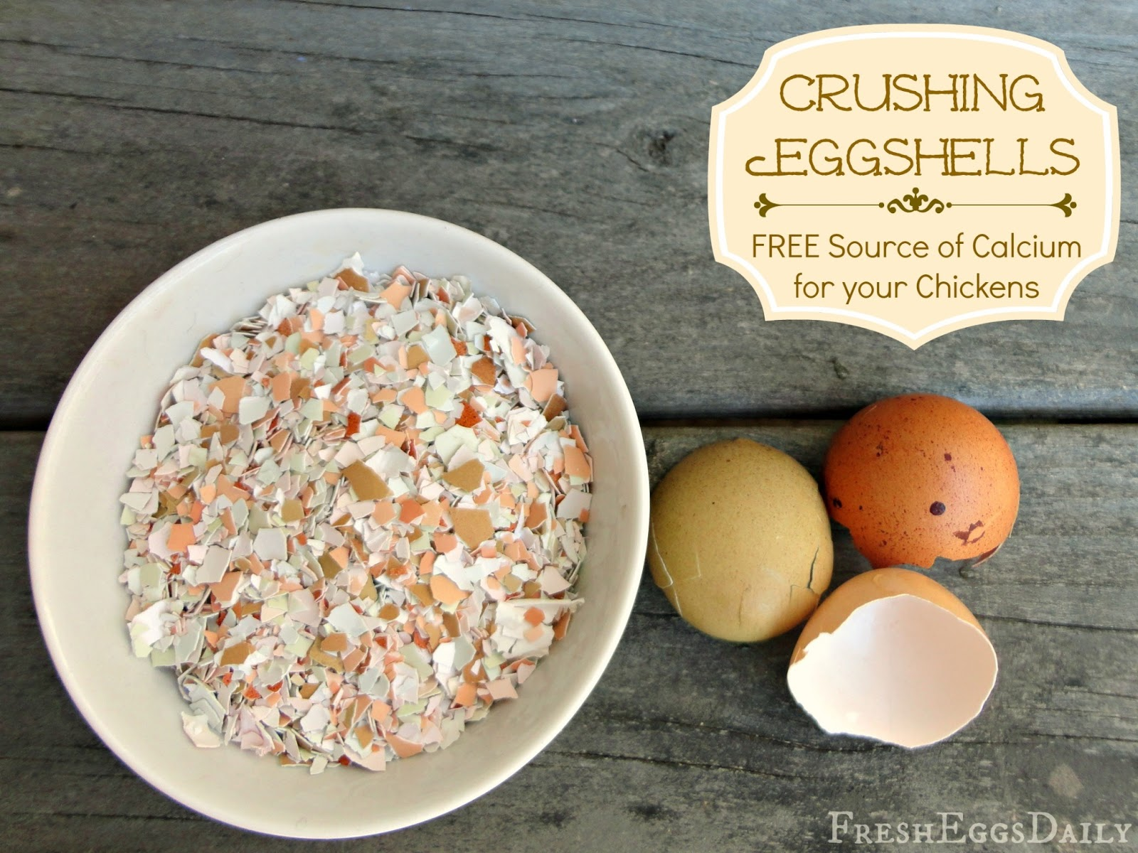 Crushed Eggshells As A Free Calcium Source For Your Chickens Fresh