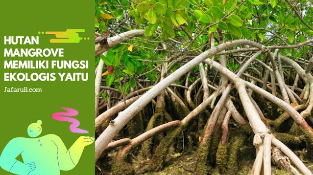 Hutan mangrove juga sangat bermanfaat bagi ekosistem loh. Hutan mangrove mampu menjaga dan melindungi ekosistem di pesisir pantai, sehingga kehidupan di sekitarnya dapat terjaga dengan baik. Hutan mangrove memiliki fungsi ekologis yaitu: