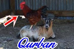 Qurban Dengan Ayam Apakah Boleh ? Saya tidak mampu Ustadz, Amalan Hari Tasyrik Apa Saja?