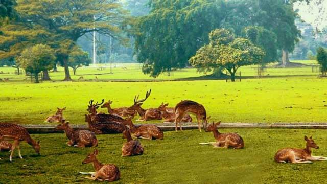 Taman_Safari