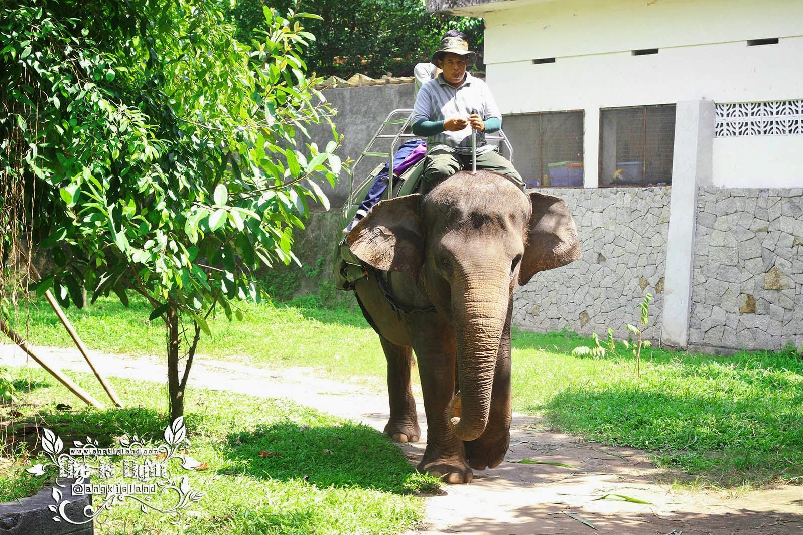 gajah Gembiraloka