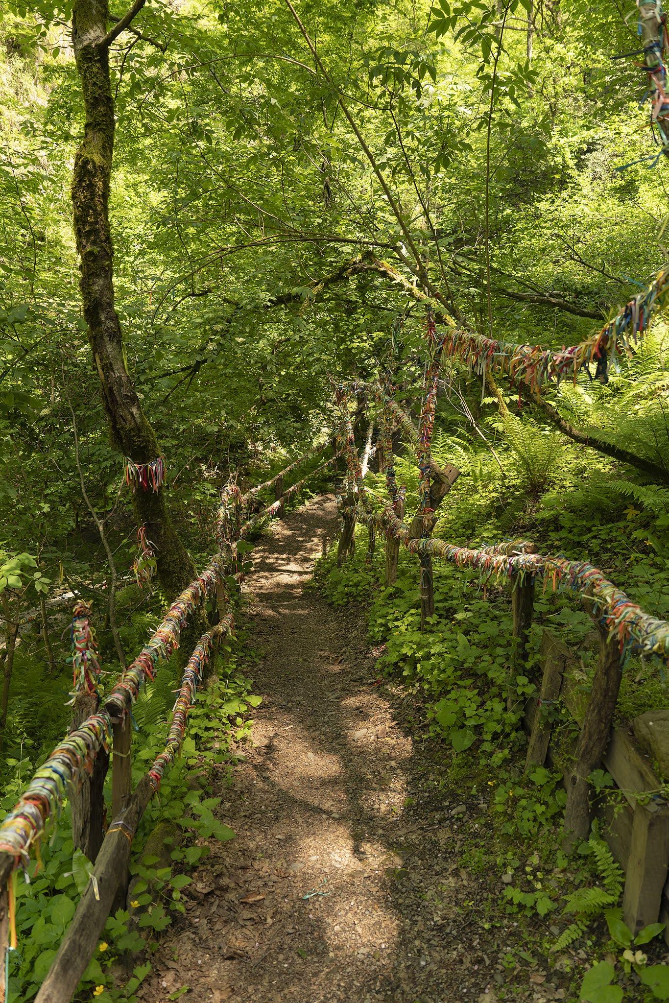 the bridge to the waterfall ribbons forest Dagomys Sochi photo Igor Novik
